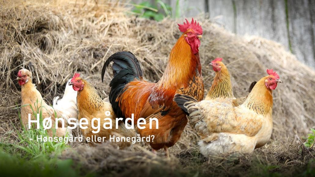 Hoensegaard