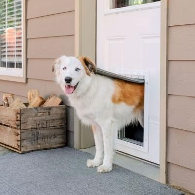 isoleret hundelem