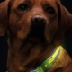 synlighed hunde
